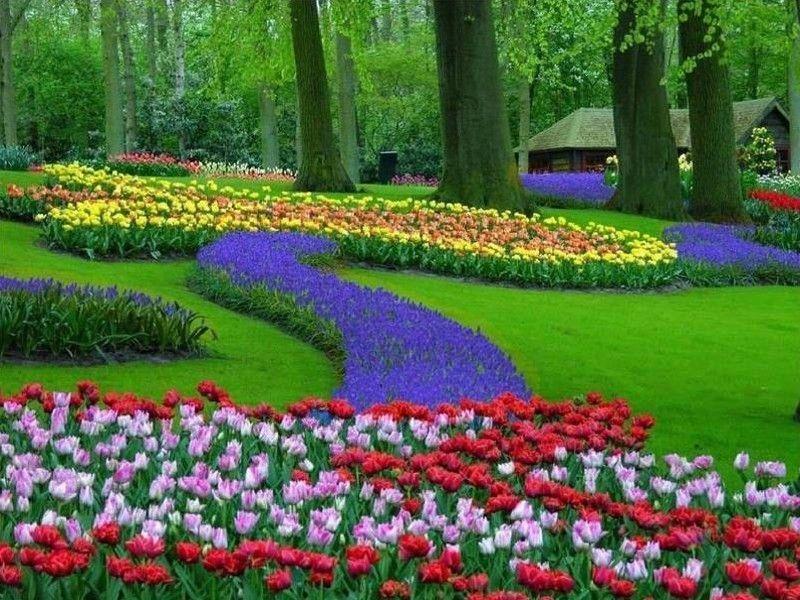 Pays Paysage Keukenhof Parc En Hollande