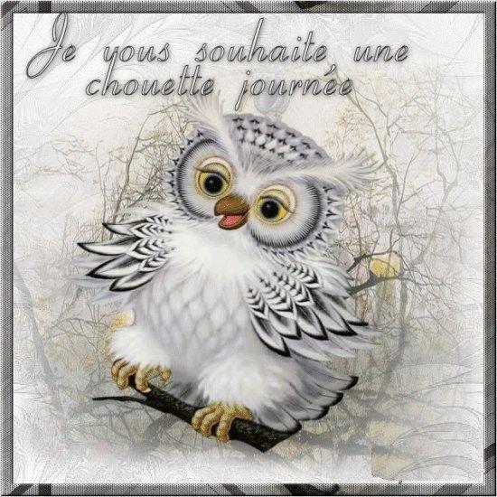 Animaux hibou - Image de chouette gratuite ...