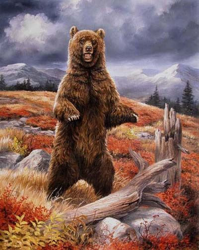 Animaux Ours Brun Debout