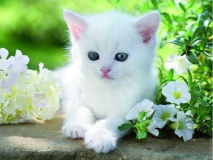 Animaux chat - Chat tout mignon ...