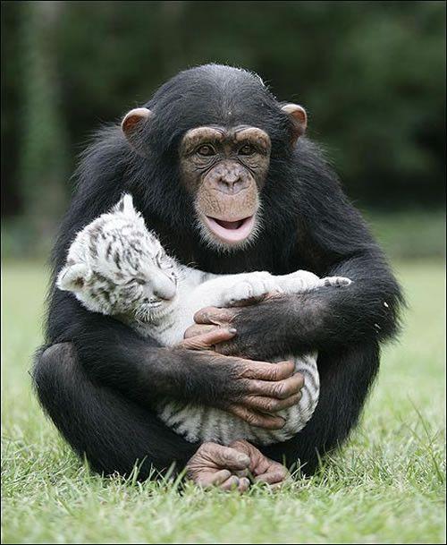 image animaux singe
