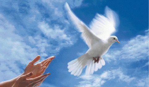 Animaux Oiseaux - Liberté de la Colombe