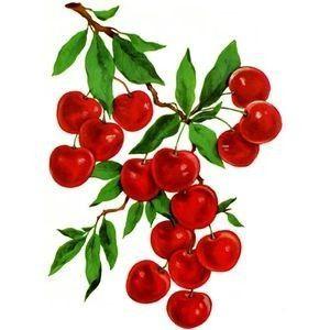 Aliments Fruits - Cerises