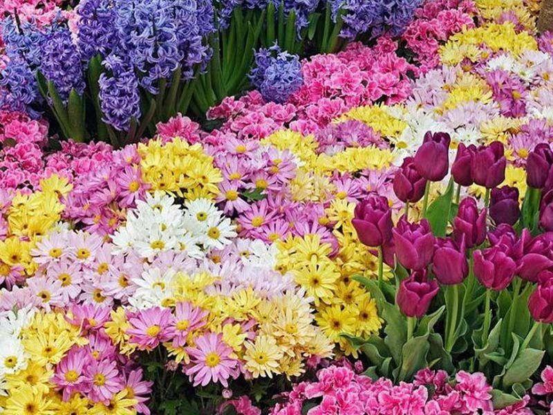 Nature - Fleurs multiples