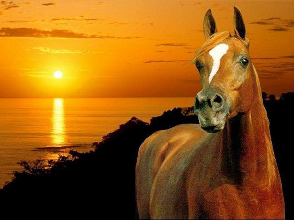 Animaux - Cheval, Coucher de soleil