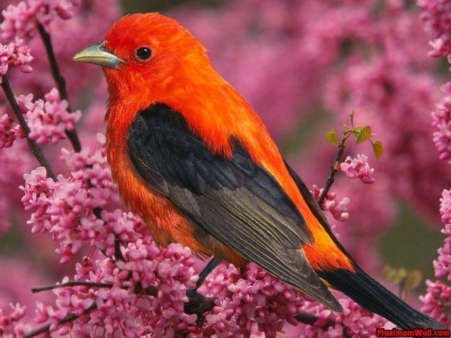 animaux oiseau orange et noir